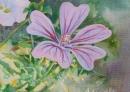 Petite fleur mauve