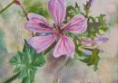Fleur mauve à l'insecte