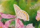 Papillon blanc et fleurs roses
