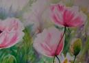 3 coquelicots roses