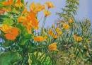 Fleurs jaunes au soleil