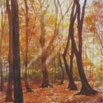 sous-bois-d'automne